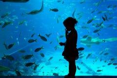 Akvarium Singapore Royaltyfri Fotografi