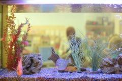 Akvariumbehållareslut upp med den gulliga fisken royaltyfria bilder