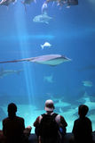 akvariumdag Arkivbild