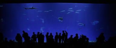 akvariumfjärd monterey royaltyfria bilder
