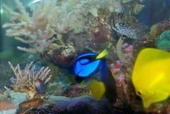 akvariumflotta Royaltyfri Foto