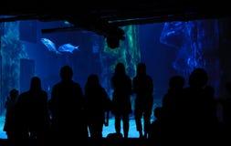 akvariumfolkbesök Arkivbild