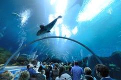 akvariumgeorgia tunnel Royaltyfri Fotografi