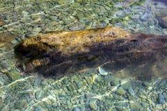 akvariumhavet stenar vattenträ Royaltyfri Bild