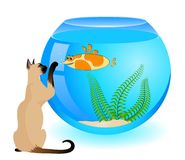 akvariumkattfisk Arkivbilder
