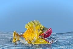 Akvariumleksakfisk som plaskar, blått, vatten royaltyfri foto