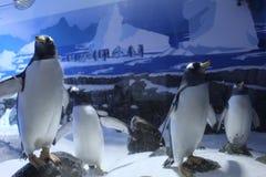Akvariumpingvin Antarktis fotografering för bildbyråer