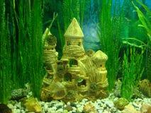 akvariumslott royaltyfria bilder