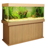 akvariumutgångspunkt Arkivbild