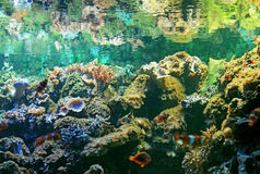 akvariumzoo Fotografering för Bildbyråer