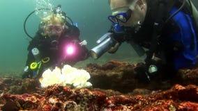 Akwalungów nurkowie i biali korale zbiory