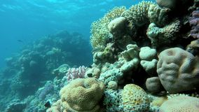 Akwalung korale i ryba, zbiory wideo