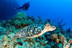AKWALUNGU żółw i nurek fotografia royalty free