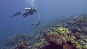 Akwalungu nurek nurkuje podwodnego błękitnego morze nad piękną rafą koralową i rybą Nurkowie pływa podwodnego ocean i oglądać zdjęcie wideo