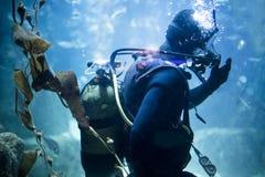 Akwalungu nurek przy podwodnym zdjęcia royalty free