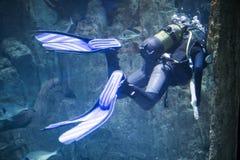 Akwalungu nurek przy podwodnym zdjęcia stock