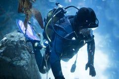 Akwalungu nurek przy podwodnym zdjęcie stock