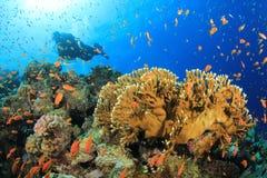 akwalungu nurkowy czerwony morze Obraz Royalty Free