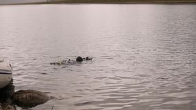 Akwalungu pikowanie w halnym jeziorze, ćwiczy techniki dla przeciwawaryjnych ratowników immersja w zimnej wodzie zbiory