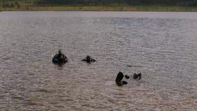 Akwalungu pikowanie w halnym jeziorze, ćwiczy techniki dla przeciwawaryjnych ratowników w wieczór czasie immersja w zimnej wodzie zbiory wideo
