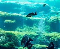 Akwalungu pikowanie w zbiorniku zdjęcie royalty free