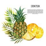 Akwarela ananasa set Zdjęcia Stock