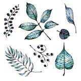 Akwarela, atrament ręki malować gałąź i liście i ilustracji