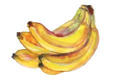 Akwarela banan ilustracja wektor