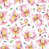 Akwarela bezszwowy wzór menchie kwitnie na popielatym tle Zdjęcia Stock