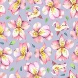Akwarela bezszwowy wzór menchie kwitnie na popielatym tle Zdjęcie Royalty Free