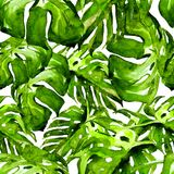 Akwarela bezszwowy wzór Ręka Malująca ilustracja Tropikalni liście i kwiaty Zwrotnika lata motyw z Monstera wzorem fotografia stock
