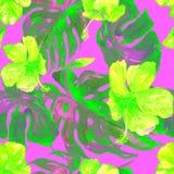 Akwarela bezszwowy wzór Ręka Malująca ilustracja Tropikalni liście i kwiaty Zwrotnika lata motyw z poślubnika wzorem Obrazy Royalty Free