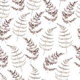 Akwarela bezszwowy wzór z brąz paprocią Minimalista botaniczny ilustracja wektor