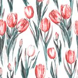 Akwarela bezszwowy wzór z czerwonymi i białymi tulipanowymi kwiatami royalty ilustracja