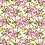 Akwarela bezszwowy wzór z kolorowymi kwiatami i liśćmi na białym tle, akwarela kwiecisty wzór, kwitnie wewnątrz Zdjęcie Stock