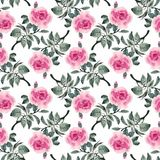 Akwarela bezszwowy wzór z kolorowymi kwiatami i liśćmi na białym tle, akwarela kwiecisty wzór, kwitnie wewnątrz Fotografia Royalty Free
