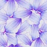 Akwarela Bezszwowy wzór z kwiatu płatkiem Zdjęcia Stock
