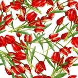 Akwarela bezszwowy wzór z malującymi czerwonymi tulipanami ilustracja wektor