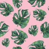 Akwarela bezszwowy wzór z monstera liśćmi ilustracja wektor
