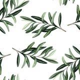 Akwarela bezszwowy wzór z oliwka liści braunches ilustracja wektor