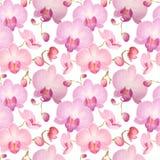 Akwarela bezszwowy wzór z orchideami Zdjęcia Stock