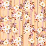 Akwarela bezszwowy wzór z piórkami i anemonów bukietami na pasiastym tle Obraz Stock