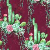 Akwarela bezszwowy wzór z sukulentami i kaktusem na Burgundy tle Obraz Royalty Free