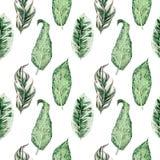 Akwarela bezszwowy wzór z tropikalnymi liśćmi i houseplants liśćmi greenfield sukulent projekta elementu kwiecisty ilustraci wekt royalty ilustracja