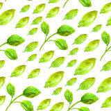 Akwarela bezszwowy wzór z zielonym liściem Obraz Stock
