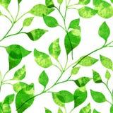 Akwarela bezszwowy wzór z zielonymi liśćmi Wektorowy illustrati Zdjęcia Stock