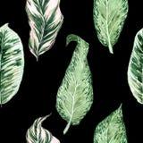 Akwarela bezszwowy wz?r z tropikalnymi li??mi i houseplants li??mi greenfield sukulent projekta elementu kwiecisty ilustraci wekt ilustracji