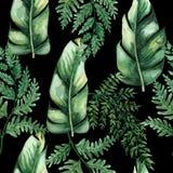 Akwarela bezszwowy wz?r z tropikalnymi li??mi i houseplants li??mi greenfield sukulent projekta elementu kwiecisty ilustraci wekt ilustracja wektor