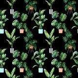 Akwarela bezszwowy wz?r z tropikalnymi li??mi i houseplants li??mi greenfield sukulent projekta elementu kwiecisty ilustraci wekt royalty ilustracja
