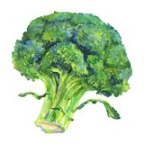 Akwarela brokuły ilustracja wektor